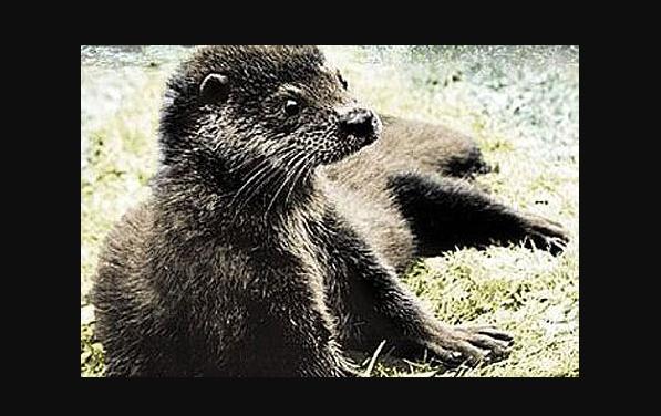 """""""Tarka de otter"""": het konvlotter!"""