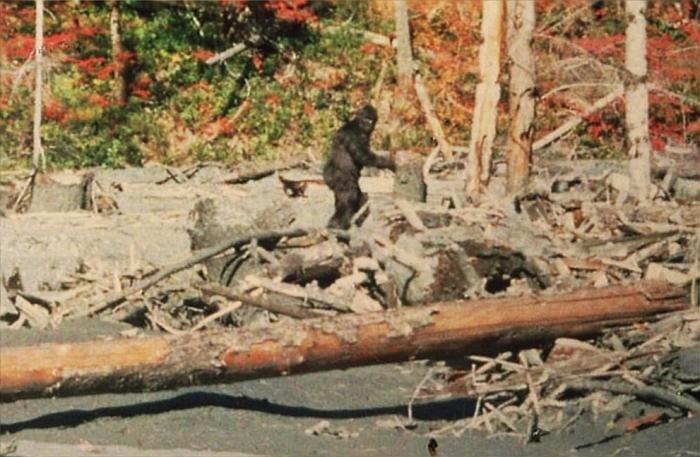 Vijftig jaar geleden: Bigfoot inCalifornië?