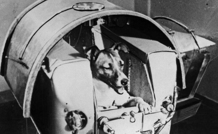 Zestig jaar geleden: Laïka gaat de ruimtein