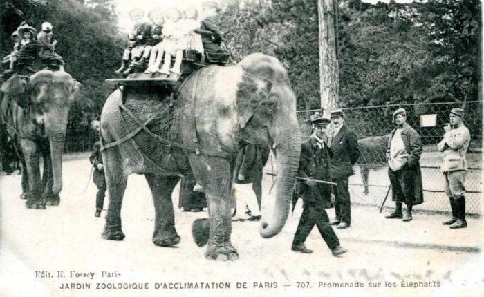 225  jaar geleden: de eerste zoo, namelijk die vanParijs